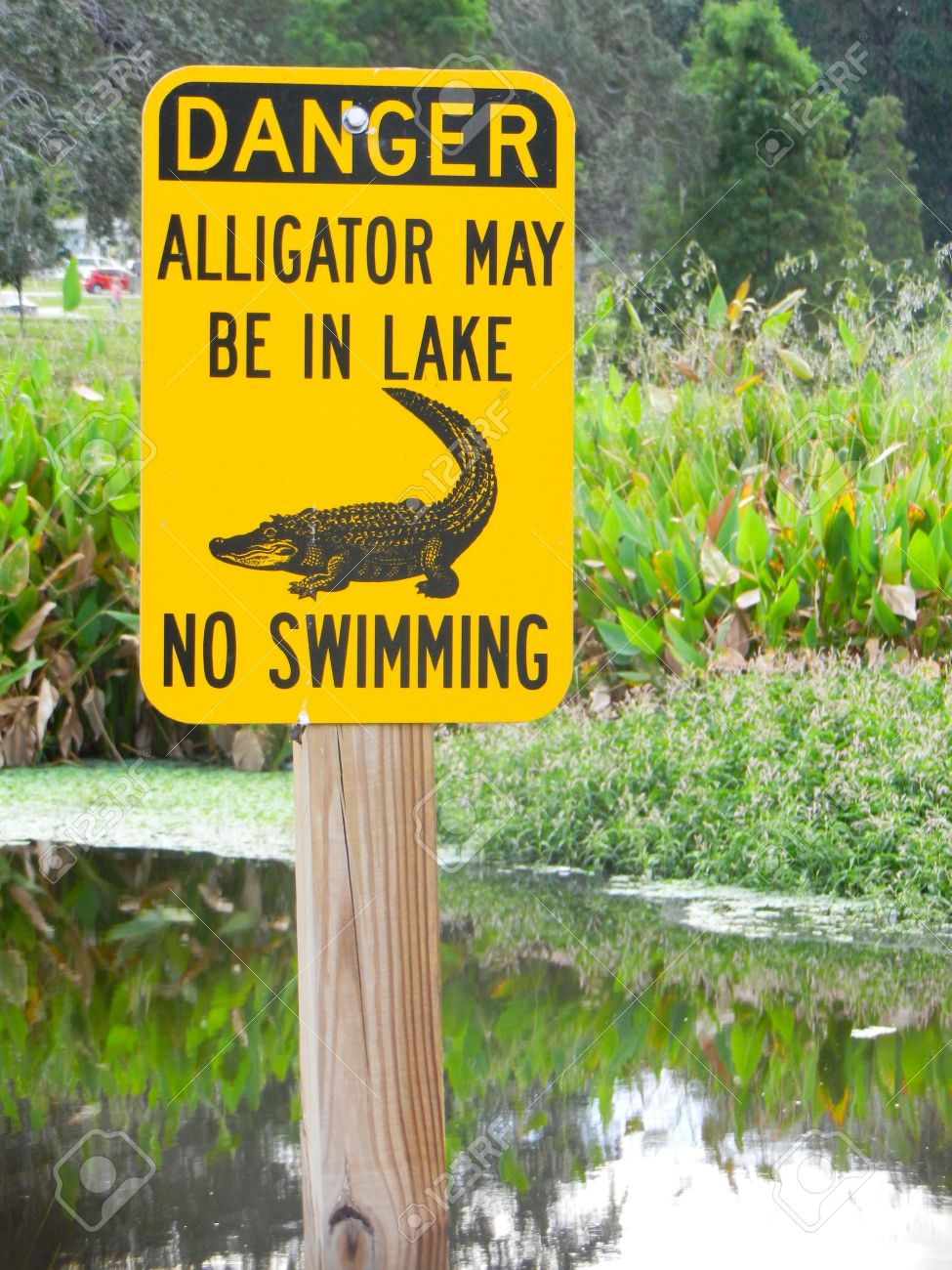 danger alligator may be in lake no swimming sign by lake stock