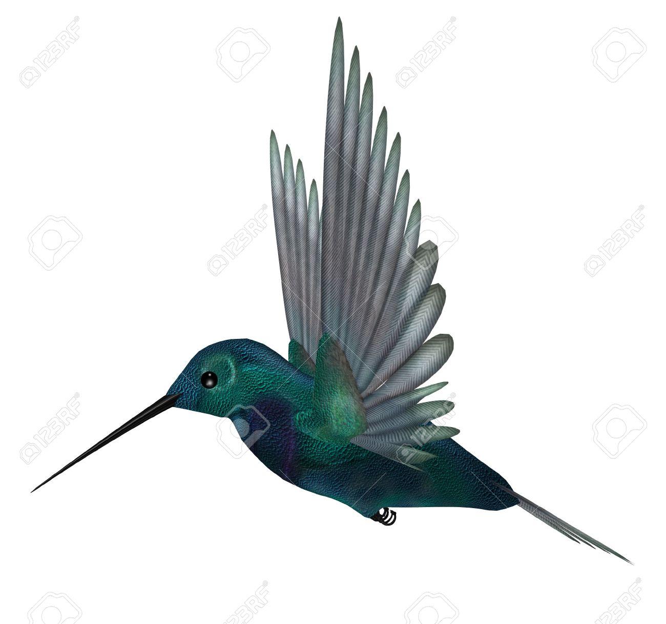 hummingbirds stock photos royalty free hummingbirds images and