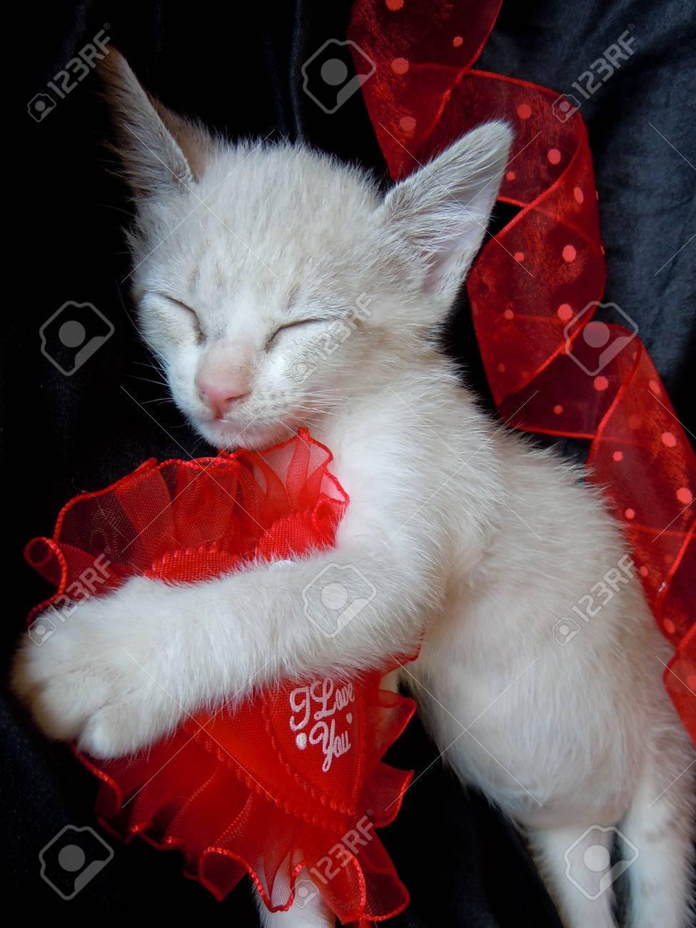 pet's valentine's dream Stock Photo - 11903151