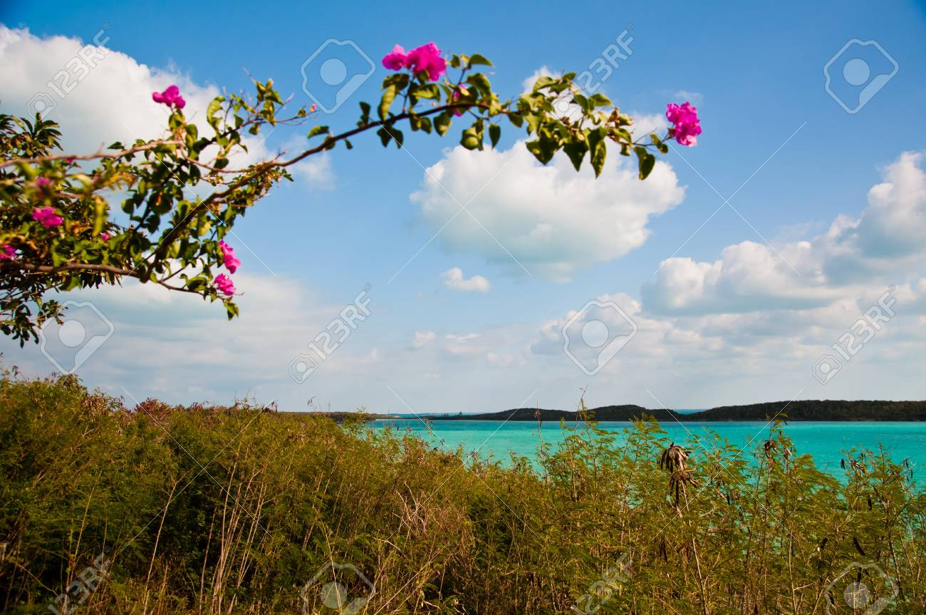 Ansicht Der Schönen Tropischen Gewässern Von Einem Bougainvillea ...