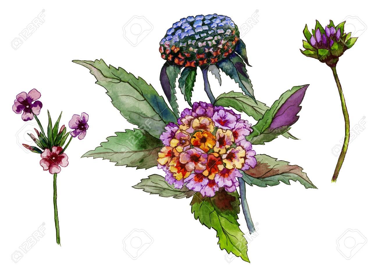 Beautiful Purple And Yellow Flowers On A Stem. Floral Set (lantana ...