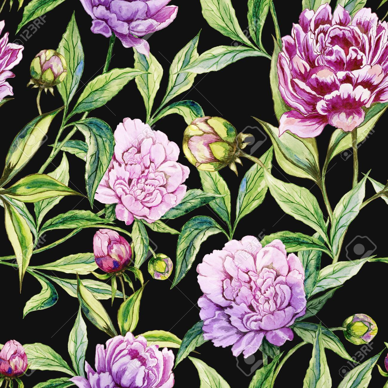 Beautiful Purple Peony Flowers With Green Leaves On Black Background Stock Photo Picture And Royalty Free Image Image 97830896