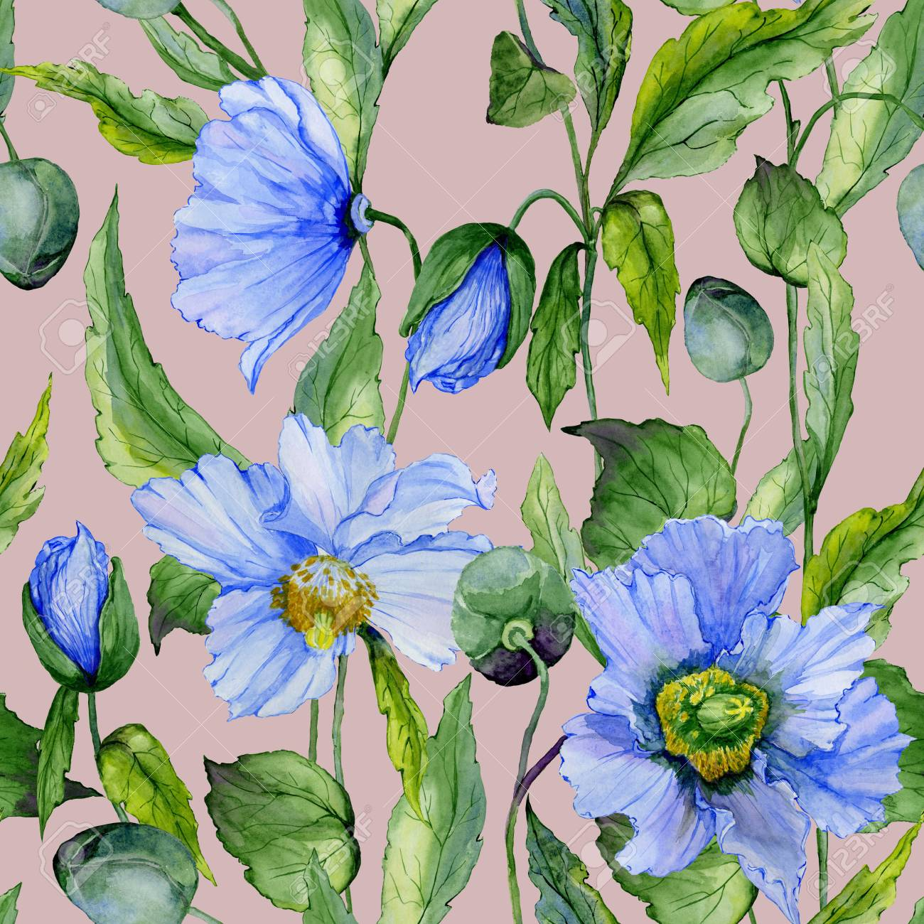 Beautiful Blue Poppy Flowers With Green Leaves On Gray Background