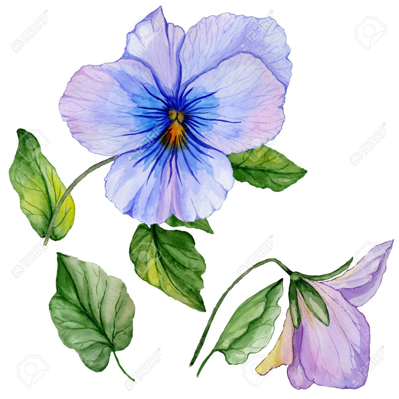 Beautiful Botanic Set Blue And Purple Viola Flowers And Leaves Stock Photo Picture And Royalty Free Image Image 98594649