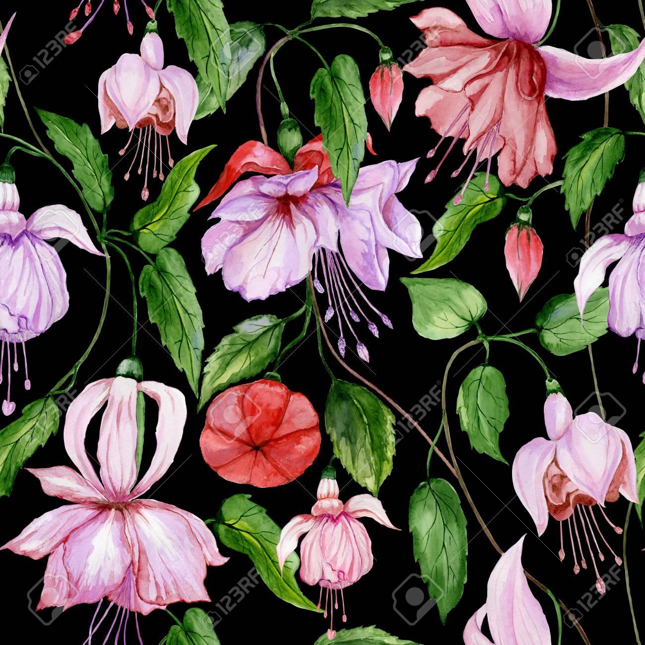 Beautiful Fuchsia Flowers On Climbing Twigs On Black Background