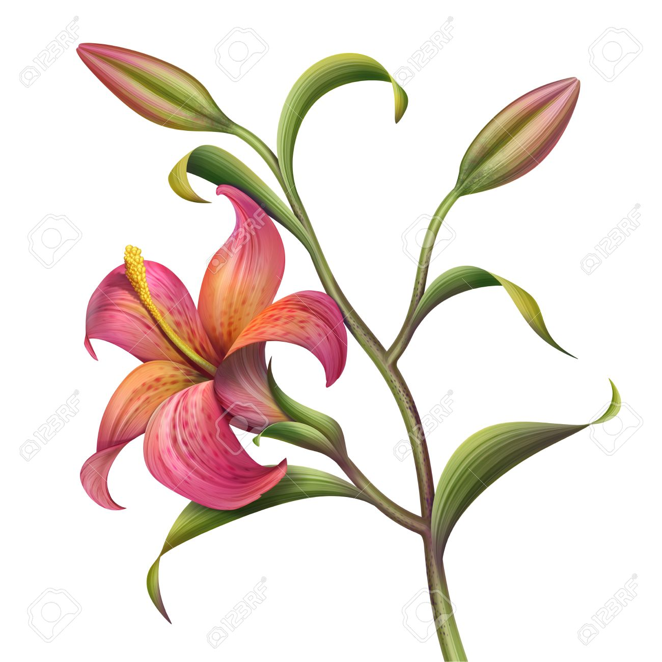 Red abstract tropical lily flower illustration stock photo picture illustration red abstract tropical lily flower illustration izmirmasajfo Images