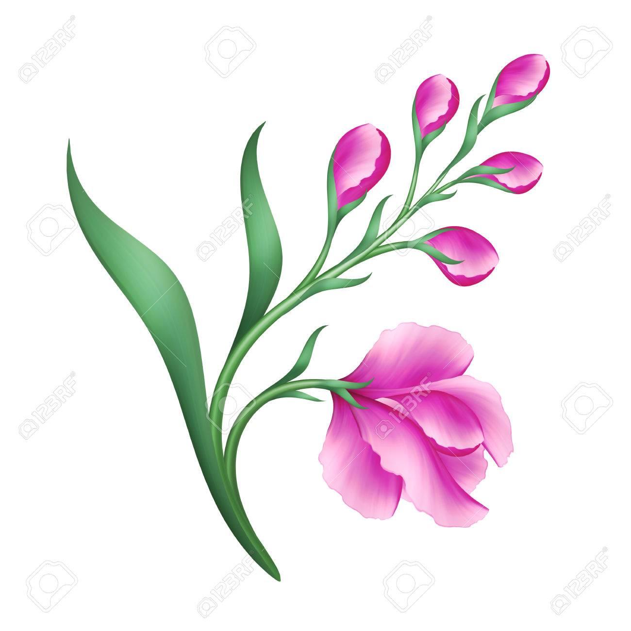 Digital illustration pink flowers design element isolated on white digital illustration pink flowers design element isolated on white background stok fotoraf 60195215 mightylinksfo