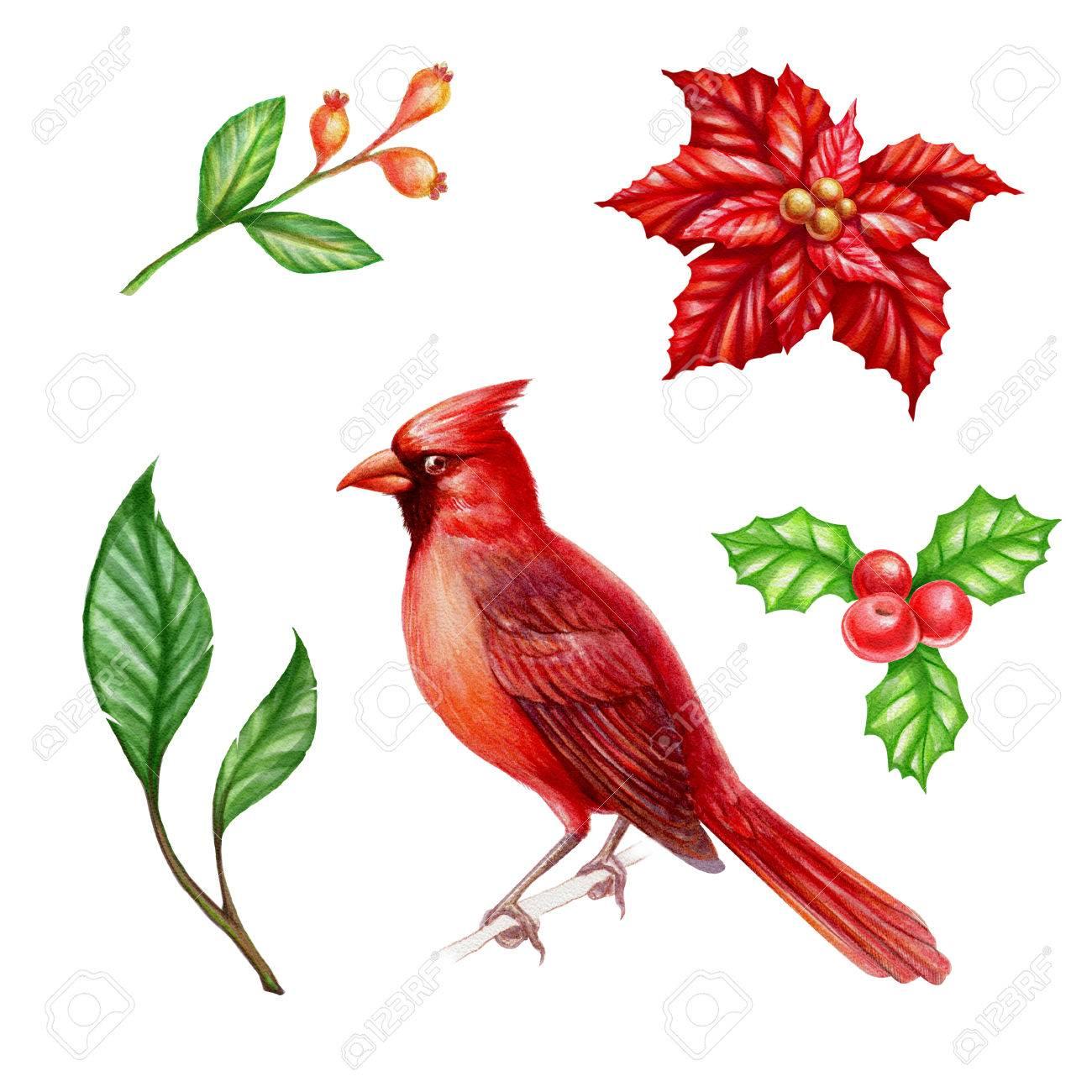 Christmas Clip Art Set Isolated On White Background Cardinal