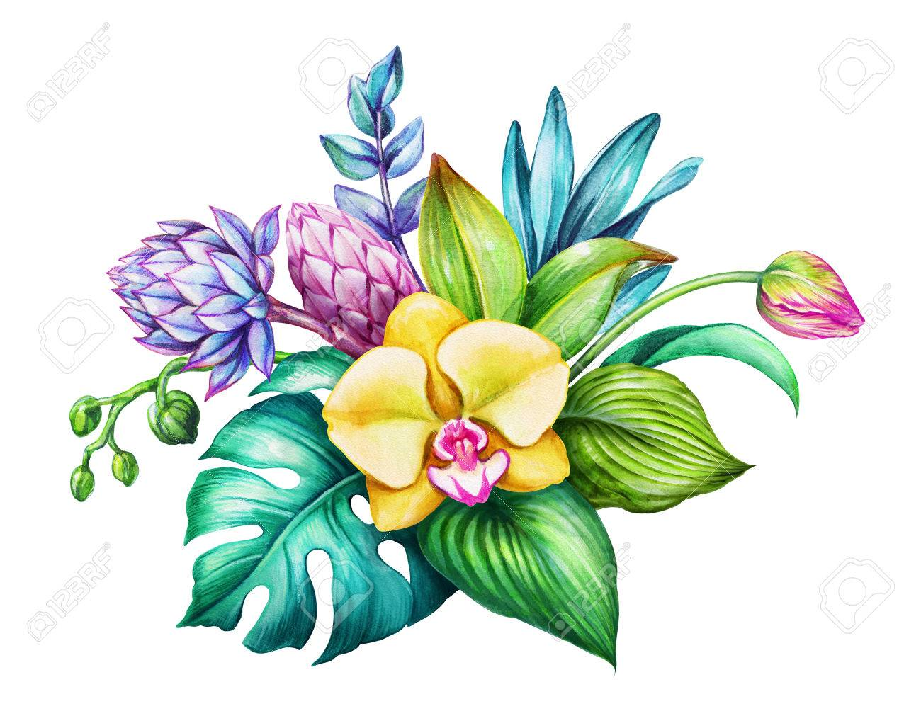 Watercolor Floral Illustration Exotic Nature Tropical Flowers