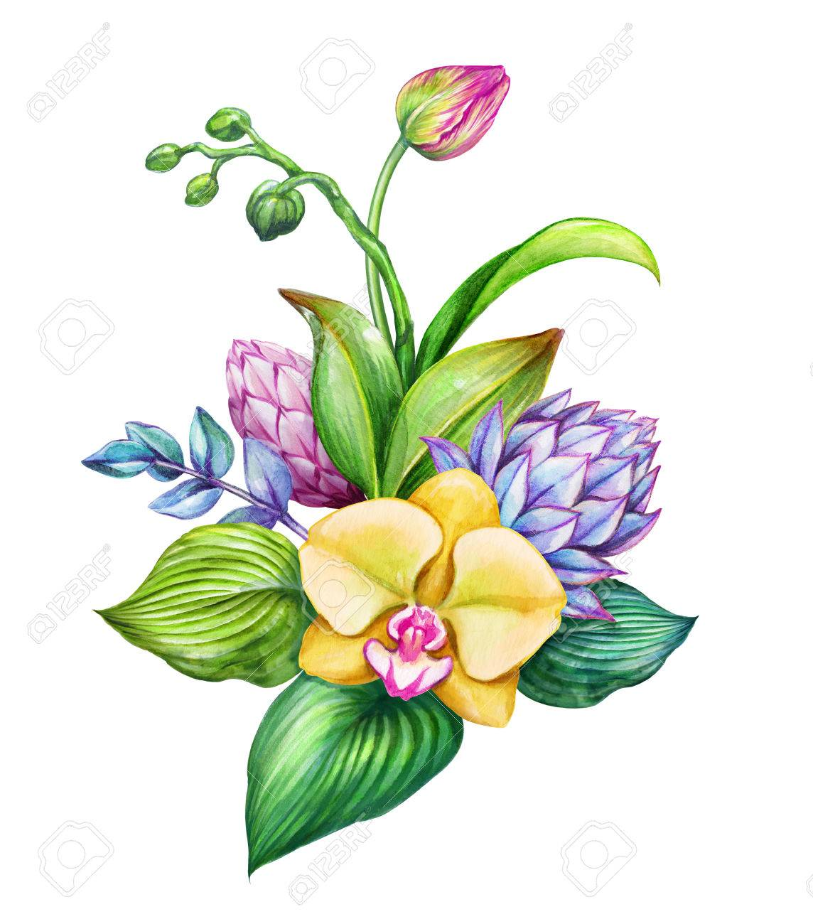 Watercolor Floral Illustration, Exotic Nature, Tropical Flowers ...