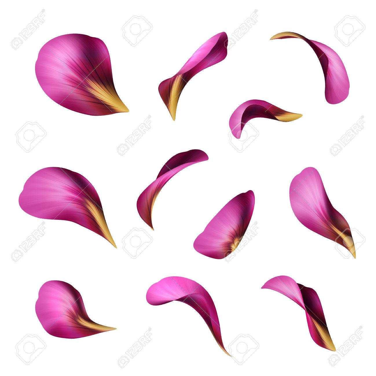 purple flower petals botanical illustration floral clip art rh 123rf com flower petal outline clipart flower petal clipart black and white