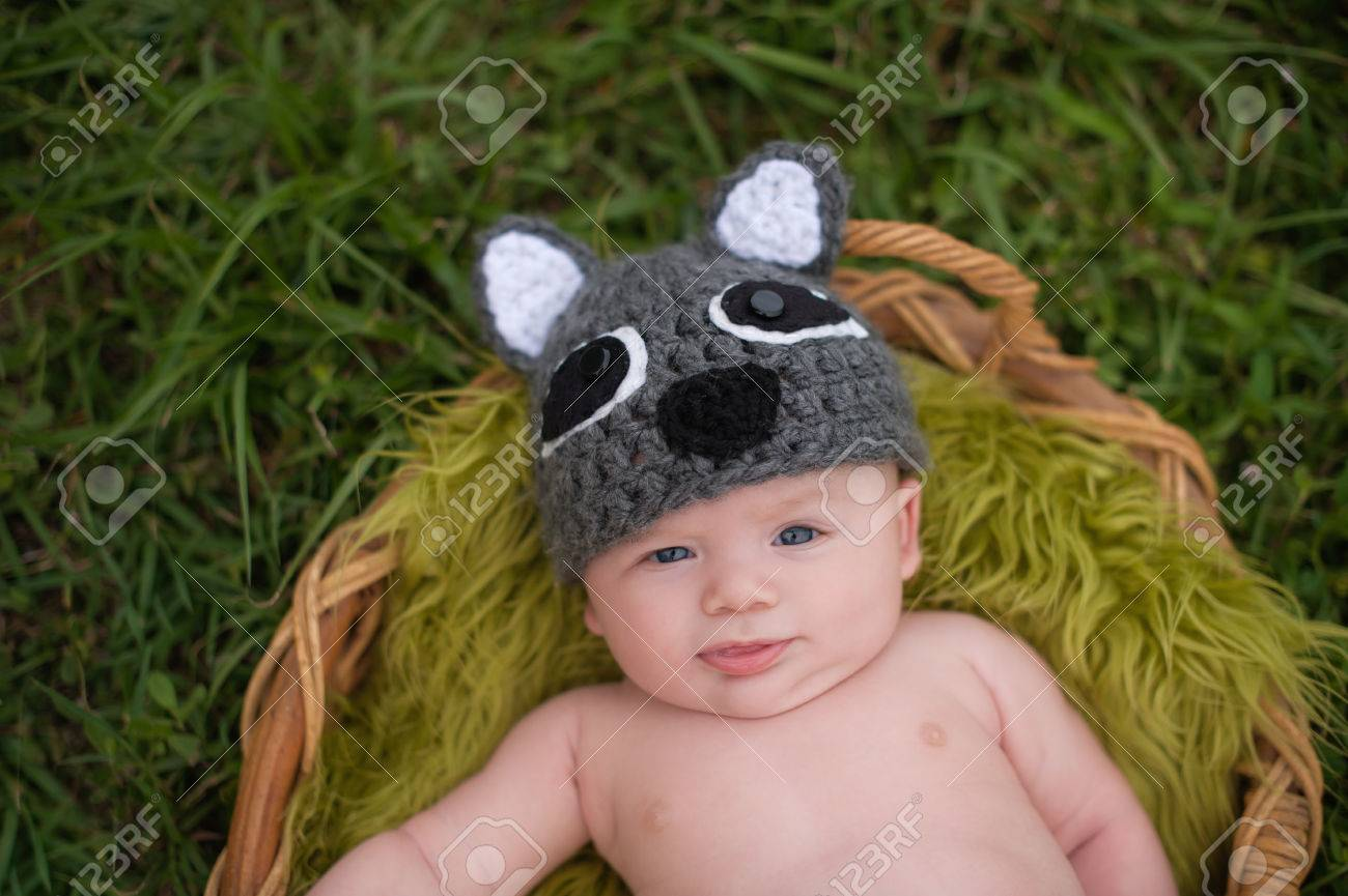 An alert three month old baby boy wearing a crocheted raccoon hat. He Stock  Photo 33d0506cff2