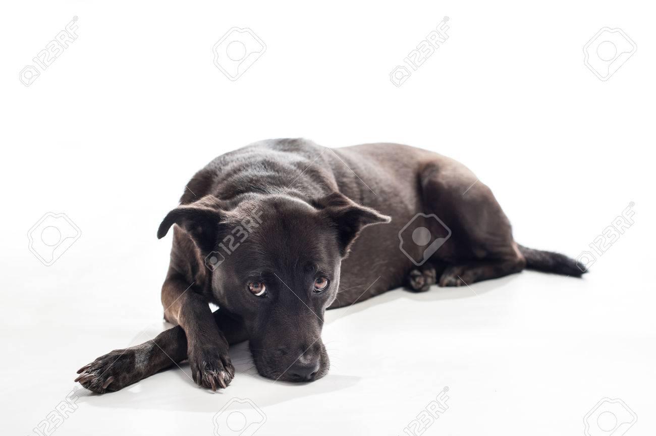 A back lit portrait of a black, mixed-breed, female dog lying