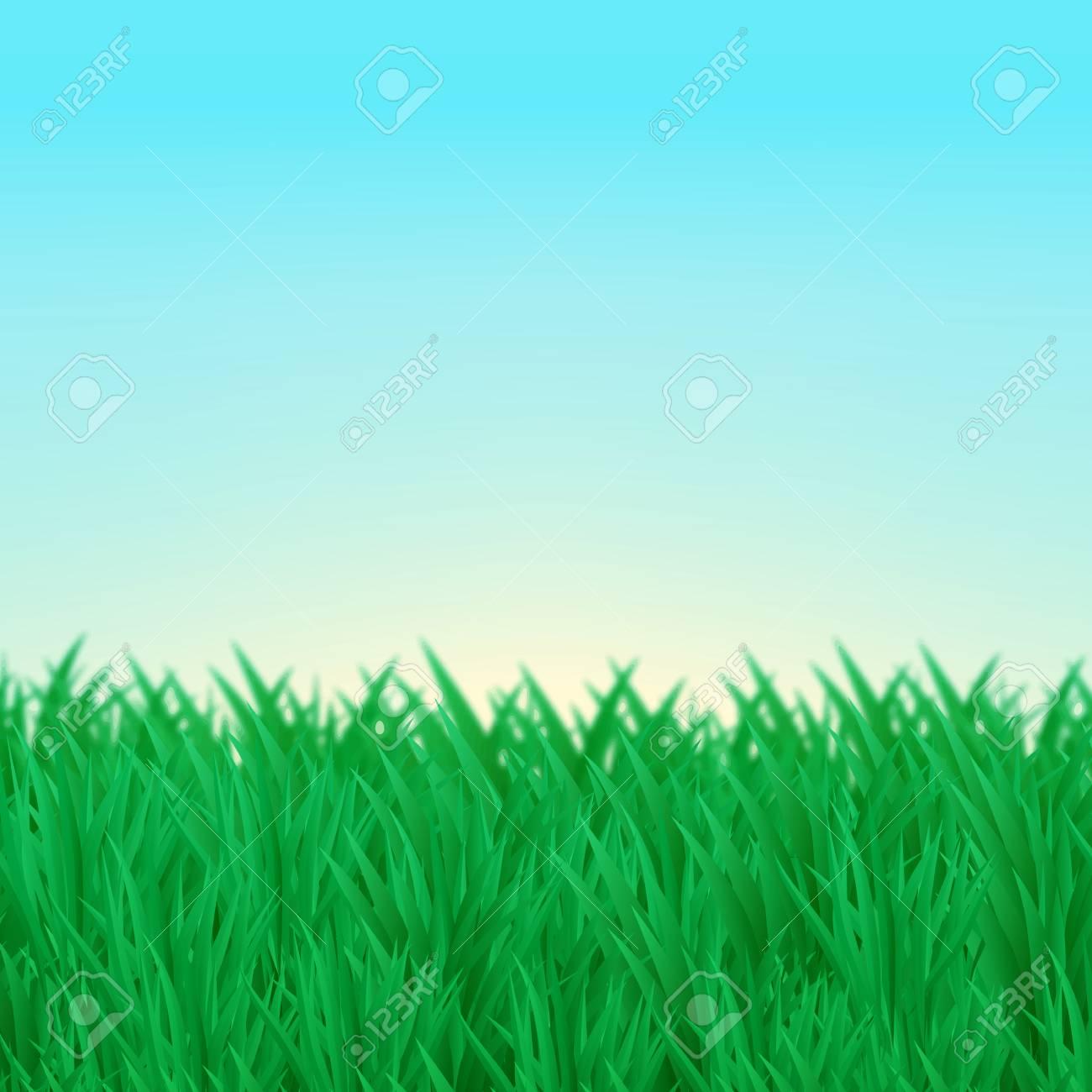 Le Fond Naturel Des Fourres Dherbe Verte Sur La Pelouse Ciel