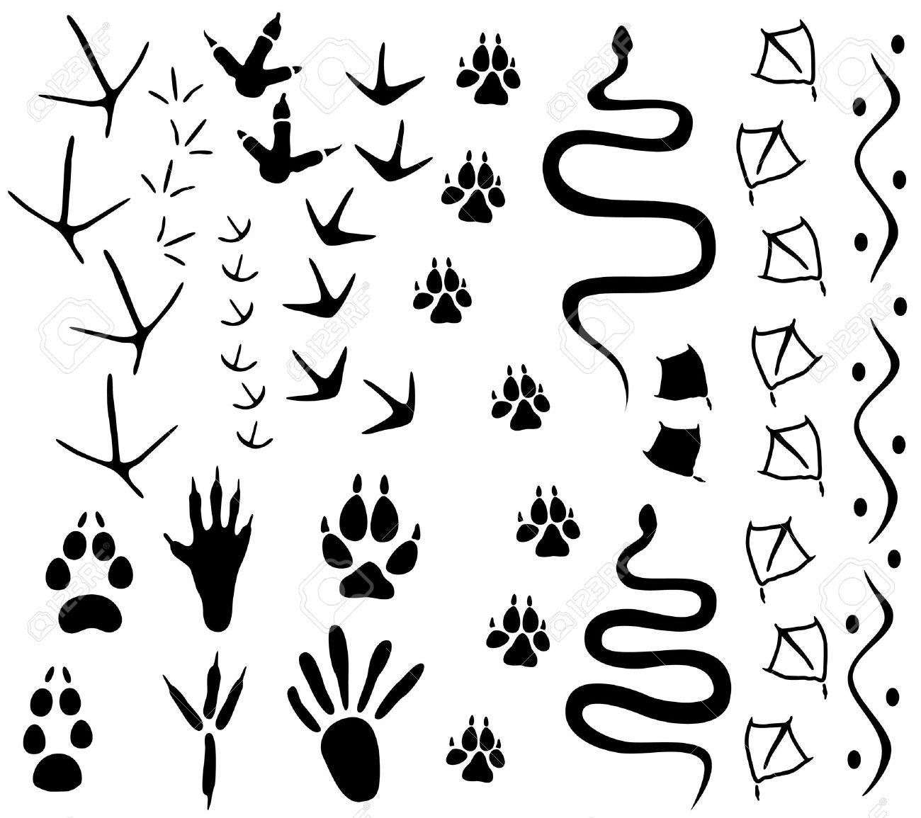 Animal paw tracks Stock Vector - 11651664