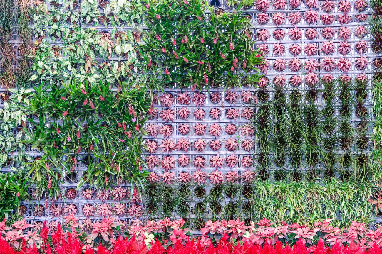 Vertical Garden On The Wall Mix Plant Stock Photo Picture And Royalty Free Image Image 98105409