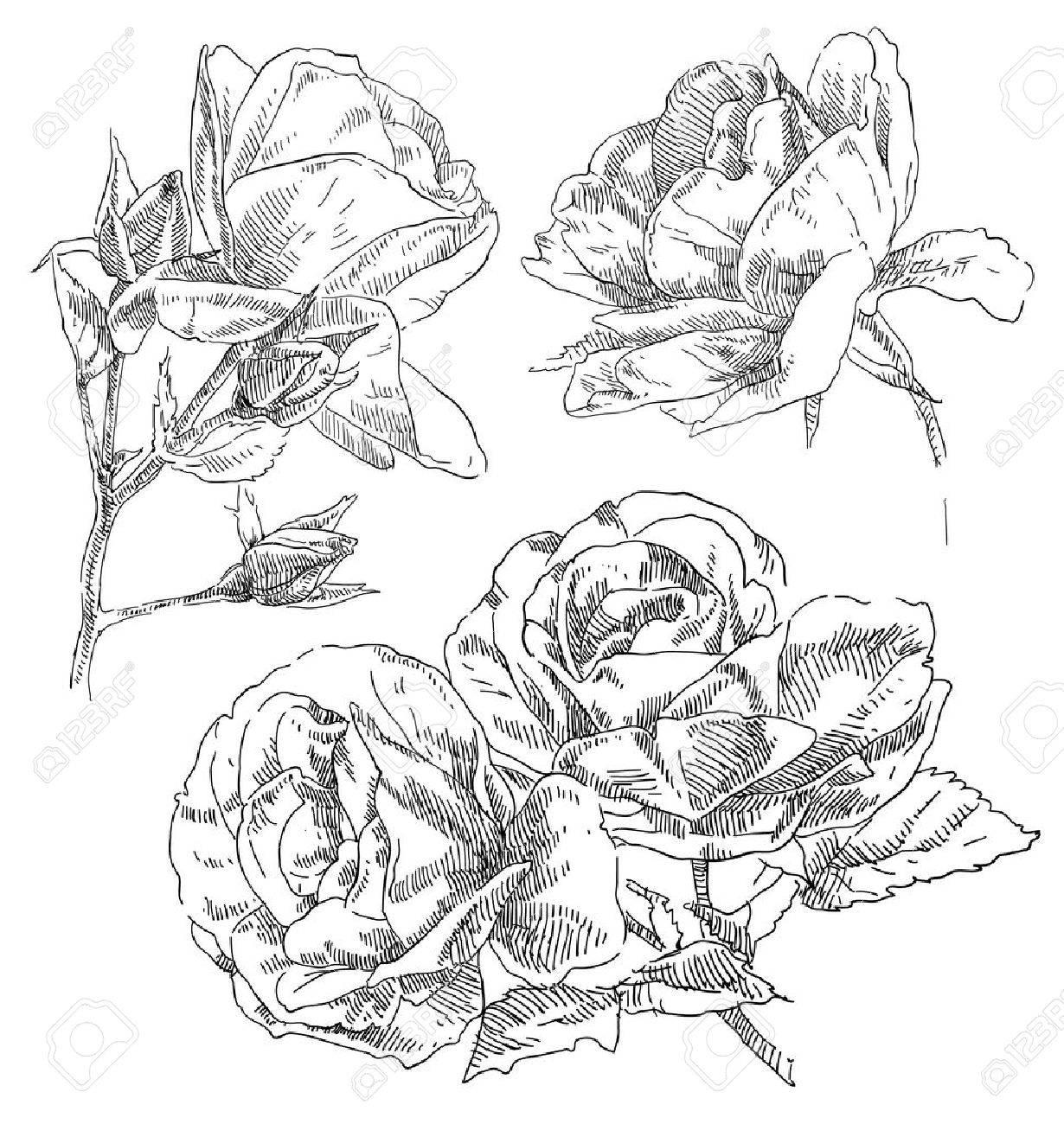 Hand drawn flower Stock Vector - 18090129