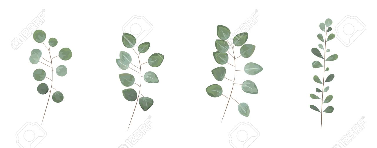 Green Leaves In The Style Of Watercolor Greenery Herbs Eucalyptus Branches
