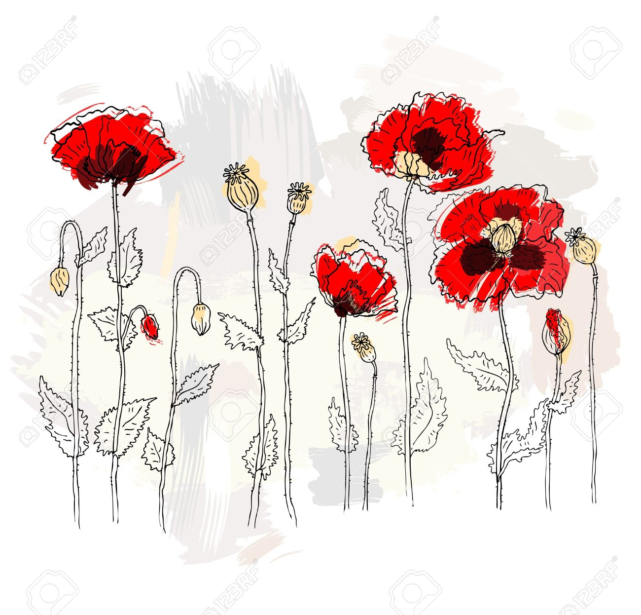 Red poppies on white background Stock Vector - 14701310