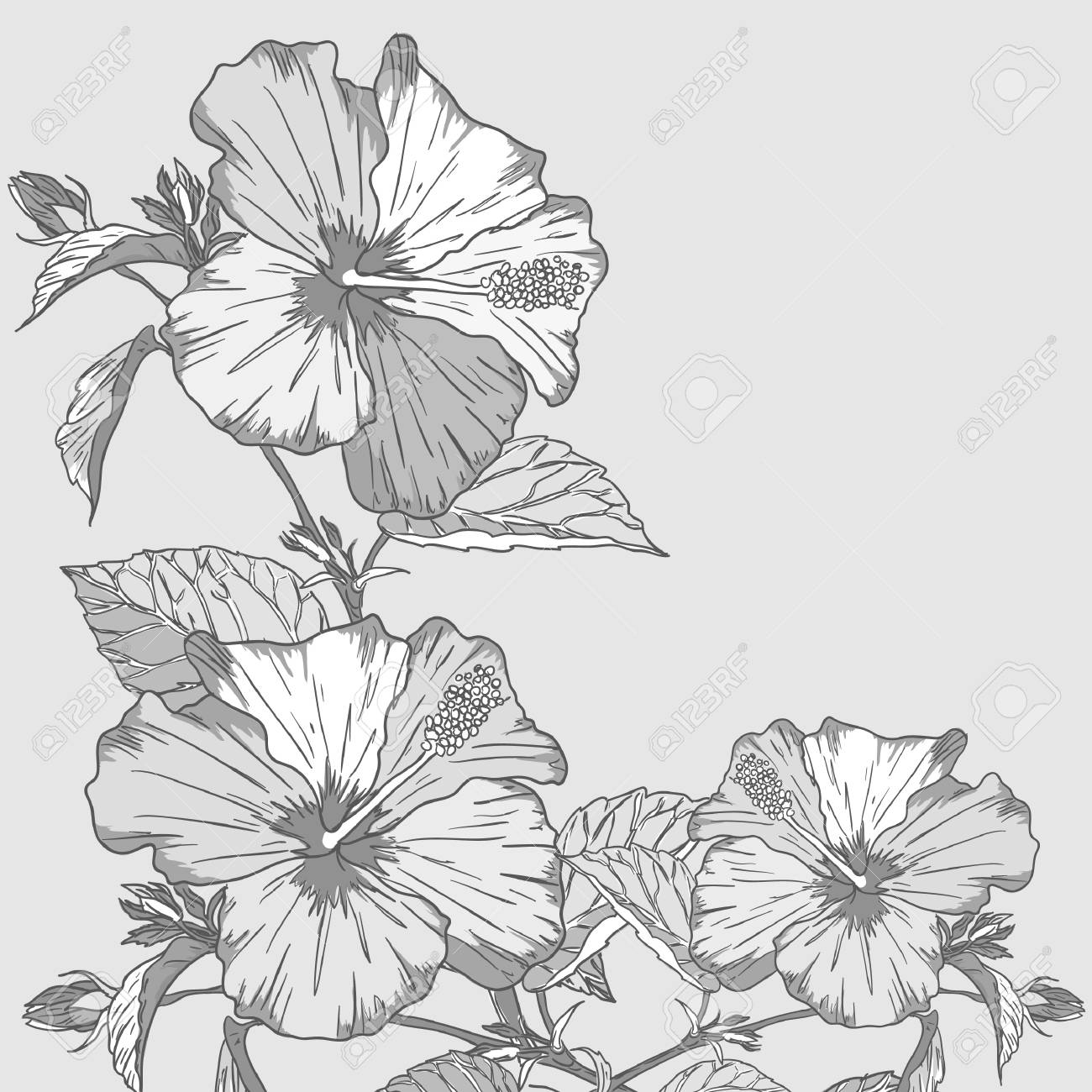 Design floral element. Stock Photo - 9251632