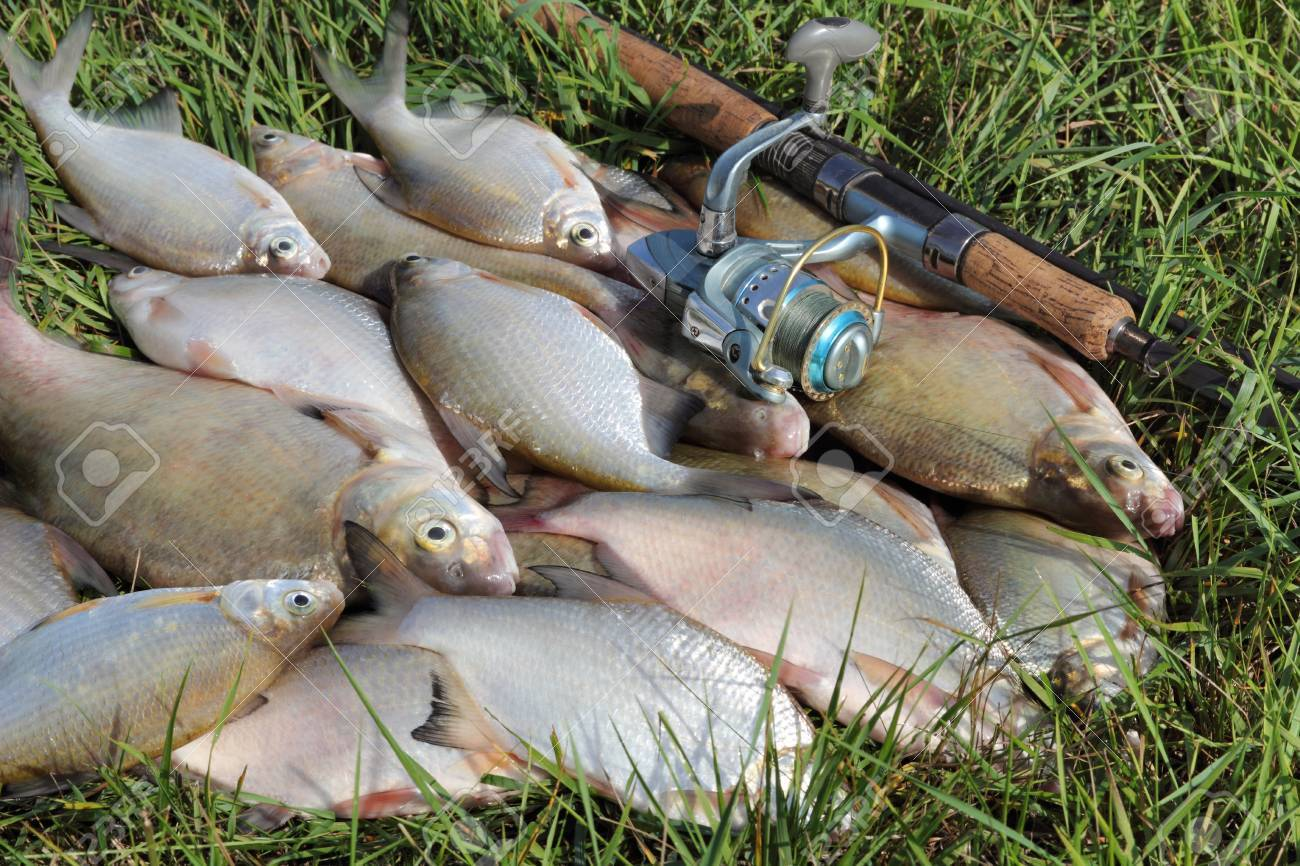 fishing catch on the grass and fishing gear Stock Photo - 14968617