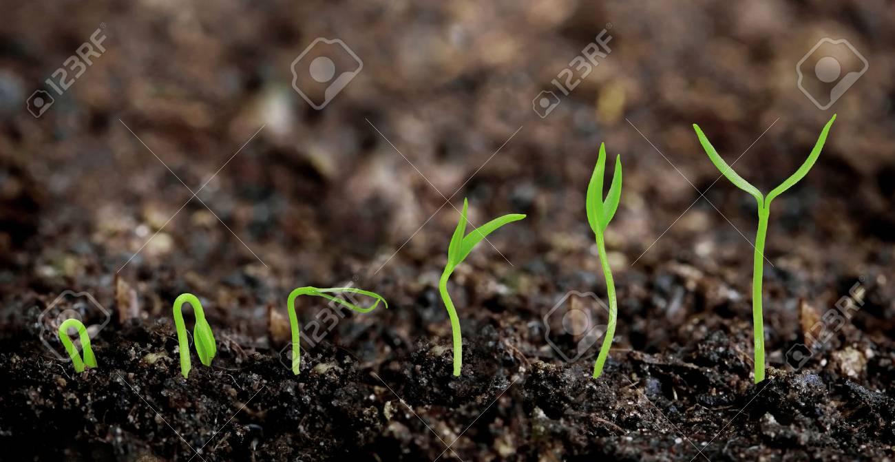 Pflanzen Wachst Aus Dem Boden Pflanze Fortschritt Lizenzfreie