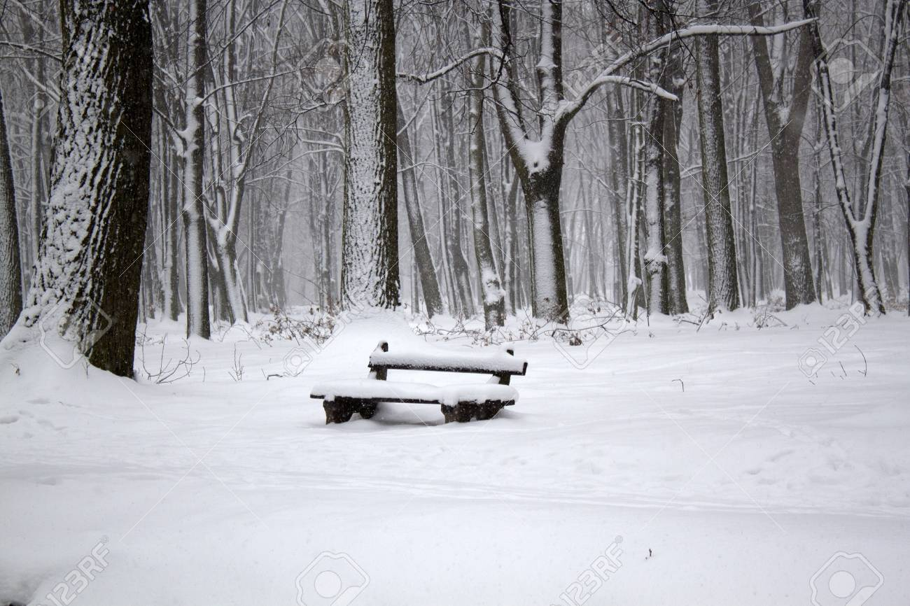 Winter landscape with alone bench Stock Photo - 18969369