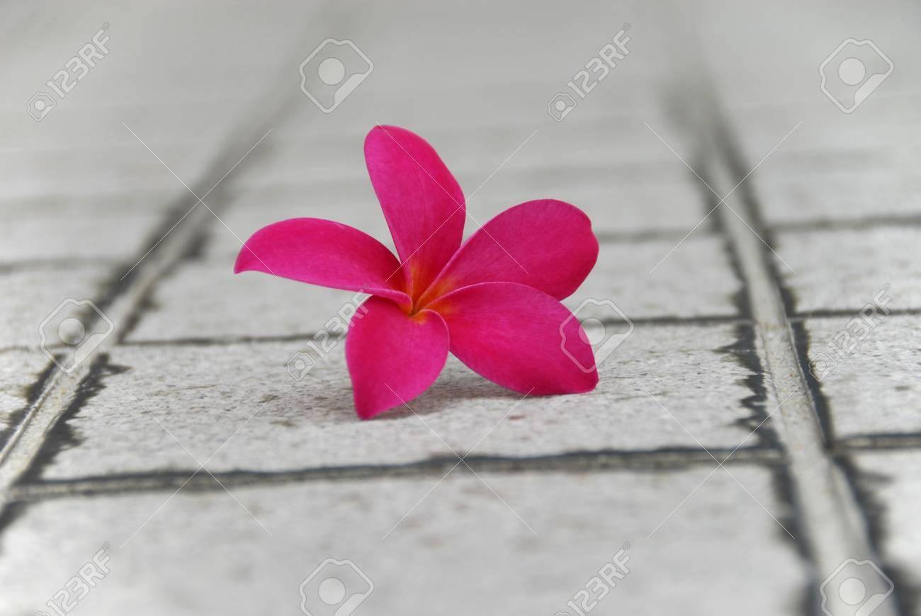 Legen Sie Eine Neue Blüte Auf Einem GranitPfad Lizenzfreie Fotos - Granitfliesen legen