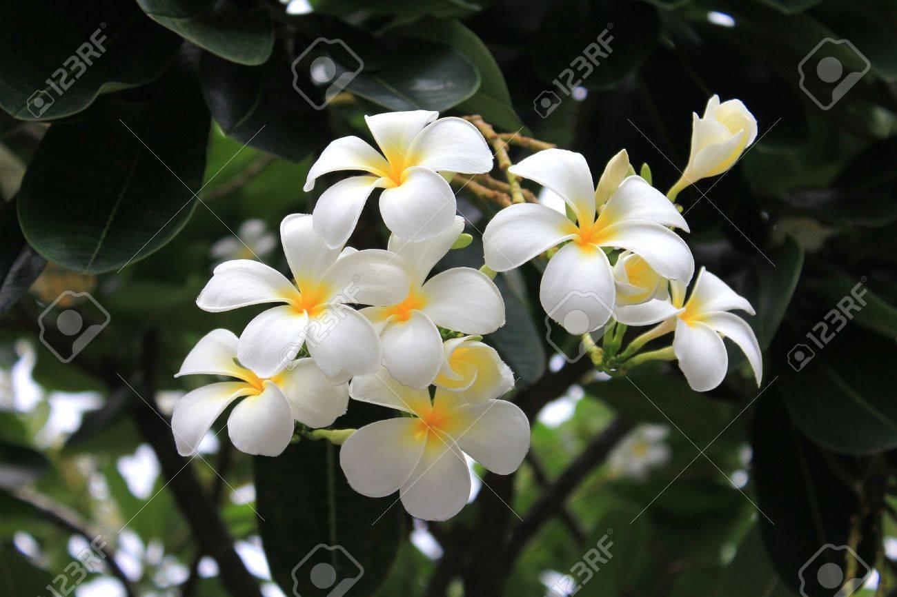 Spa Flower Stock Photo - 7451855
