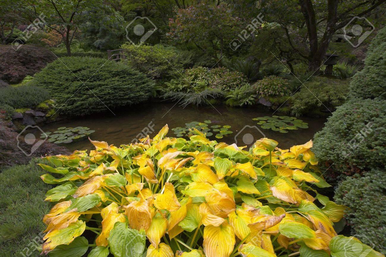 foto de archivo una cama de flores exticas y un pequeo estanque en japons decorativos para el jardn en un parque