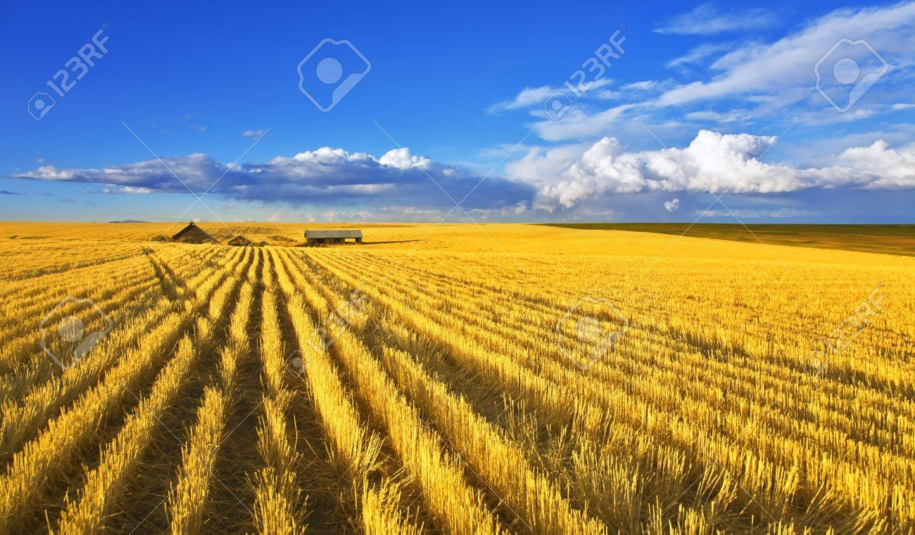 Solar autumn midday on fields of Montana Stock Photo - 4085671