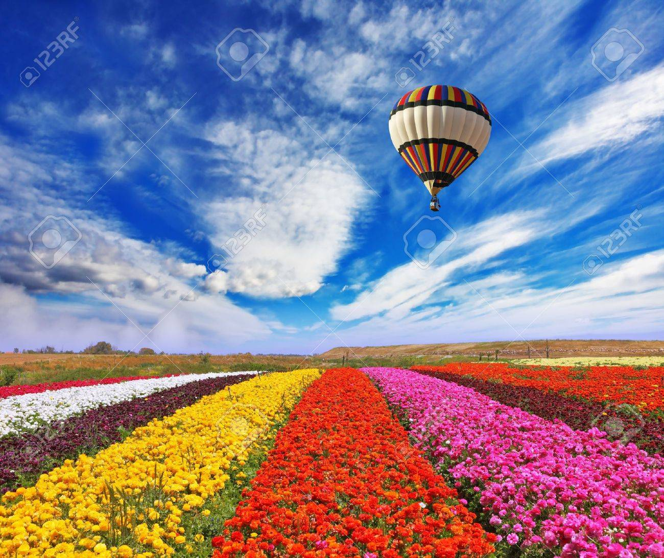 Elegant multi-color rural fields with flowers Over field the huge air balloon flies - 21654585