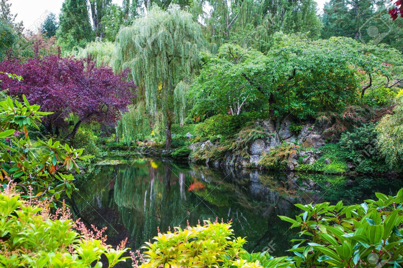 In a small pond, overgrown with lilies, reflected trees and flowers. Amazing floral park Butchart Gardens on Vancouver Island Stock Photo - 44629374