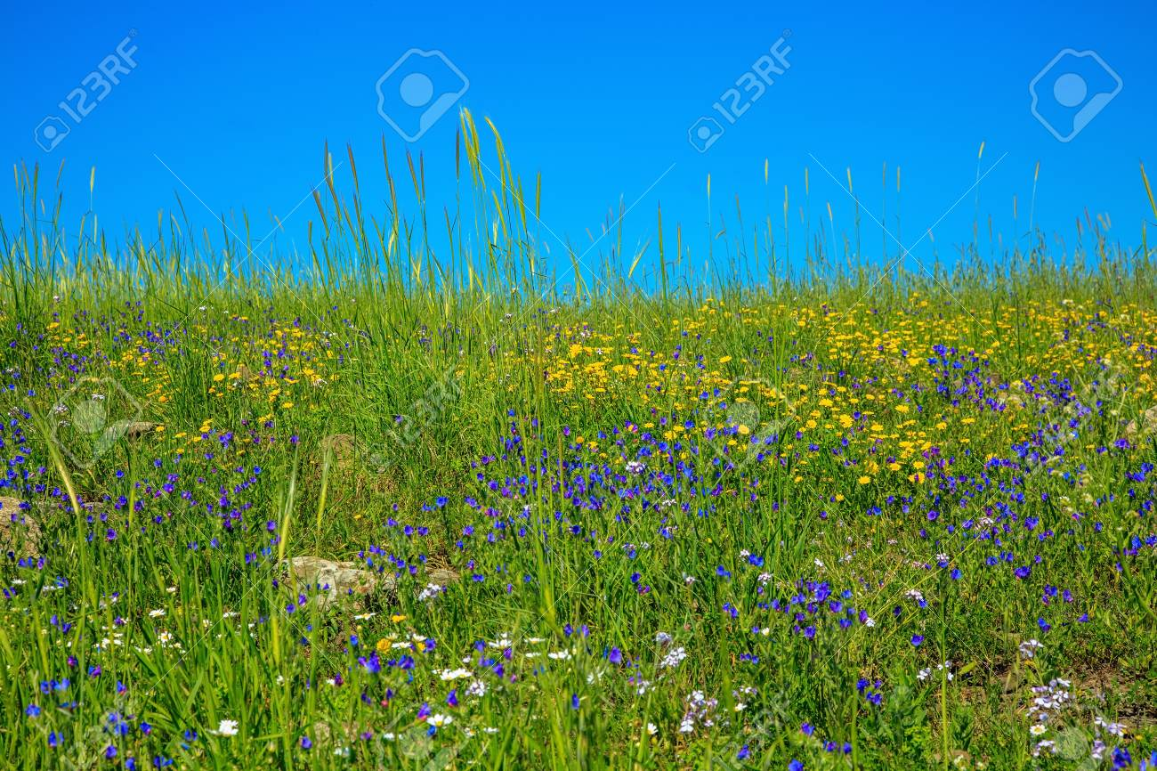 Gentle Hills Covered With A Carpet Of Wild Flowers Spring Flowering