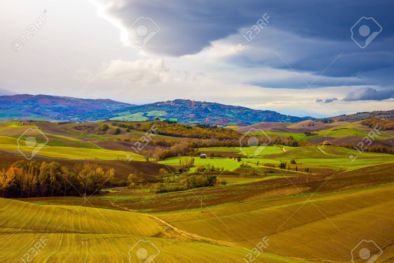 Picturesque hills of the legendary Tuscany. Agro-tourism. Rural farms. Olive trees on green grassy meadows. Beautiful Italy. - 142051927
