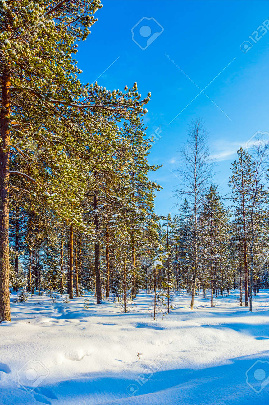 Journey to the Arctic Circle. Lapland. Snowy Christmas day. The concept of exotic and extreme travel - 146429832