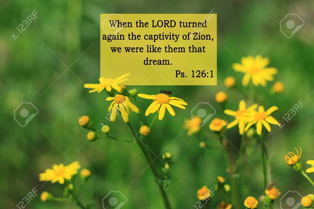 Bible Quotes On Yellow Flowers Background Card With Text Sign Stock Photo Picture And Royalty Free Image Image 146017201