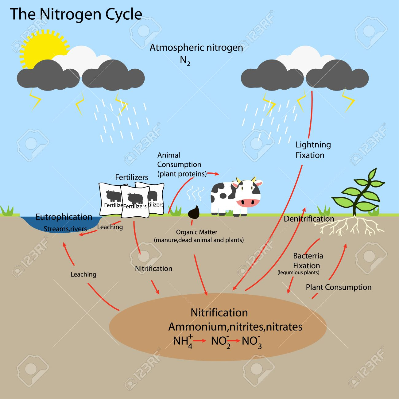 The nitrogen cycle royalty free cliparts vectors and stock the nitrogen cycle stock vector 48054995 pooptronica Images