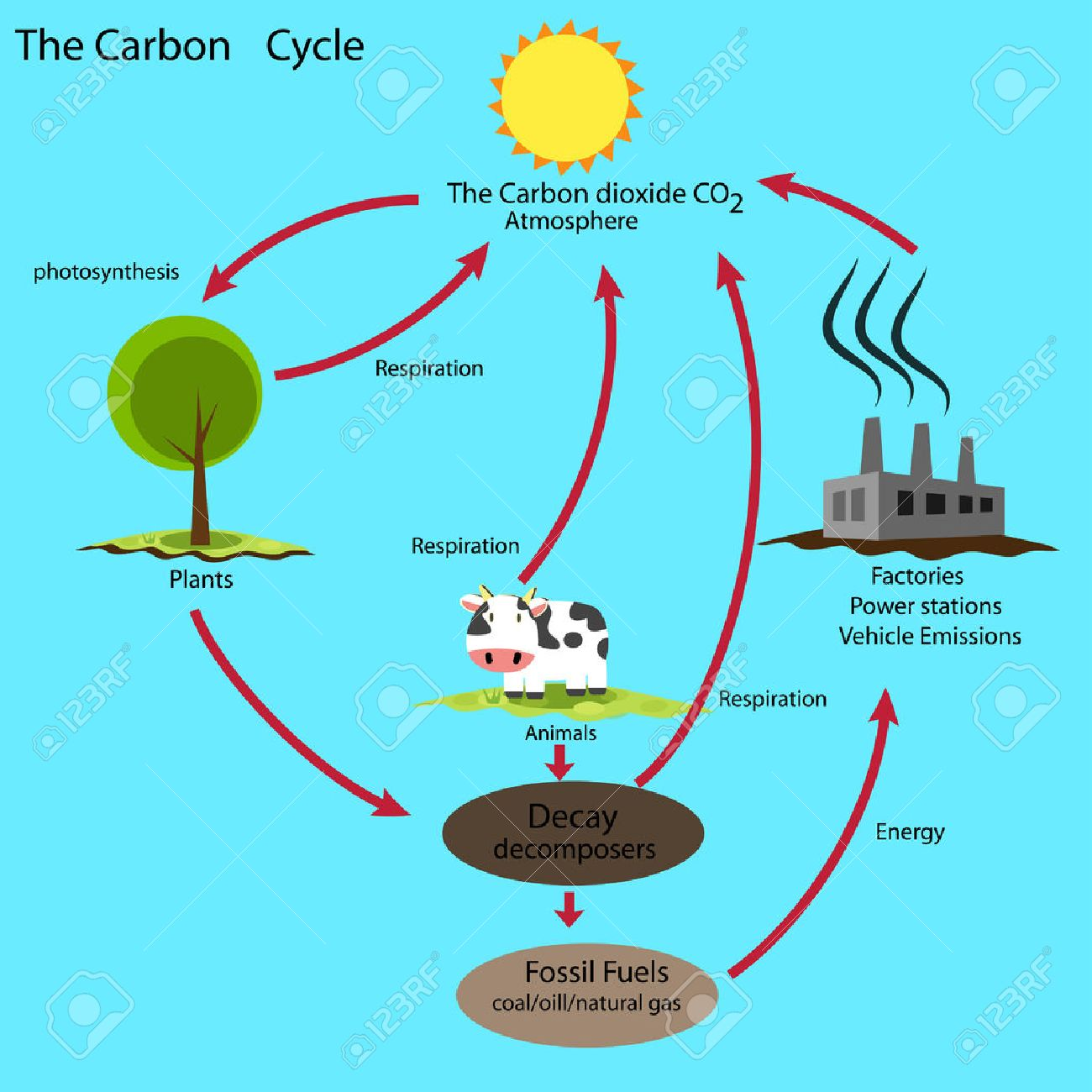 Carbon cycle royalty free cliparts vectors and stock carbon cycle stock vector 48055004 ccuart Choice Image