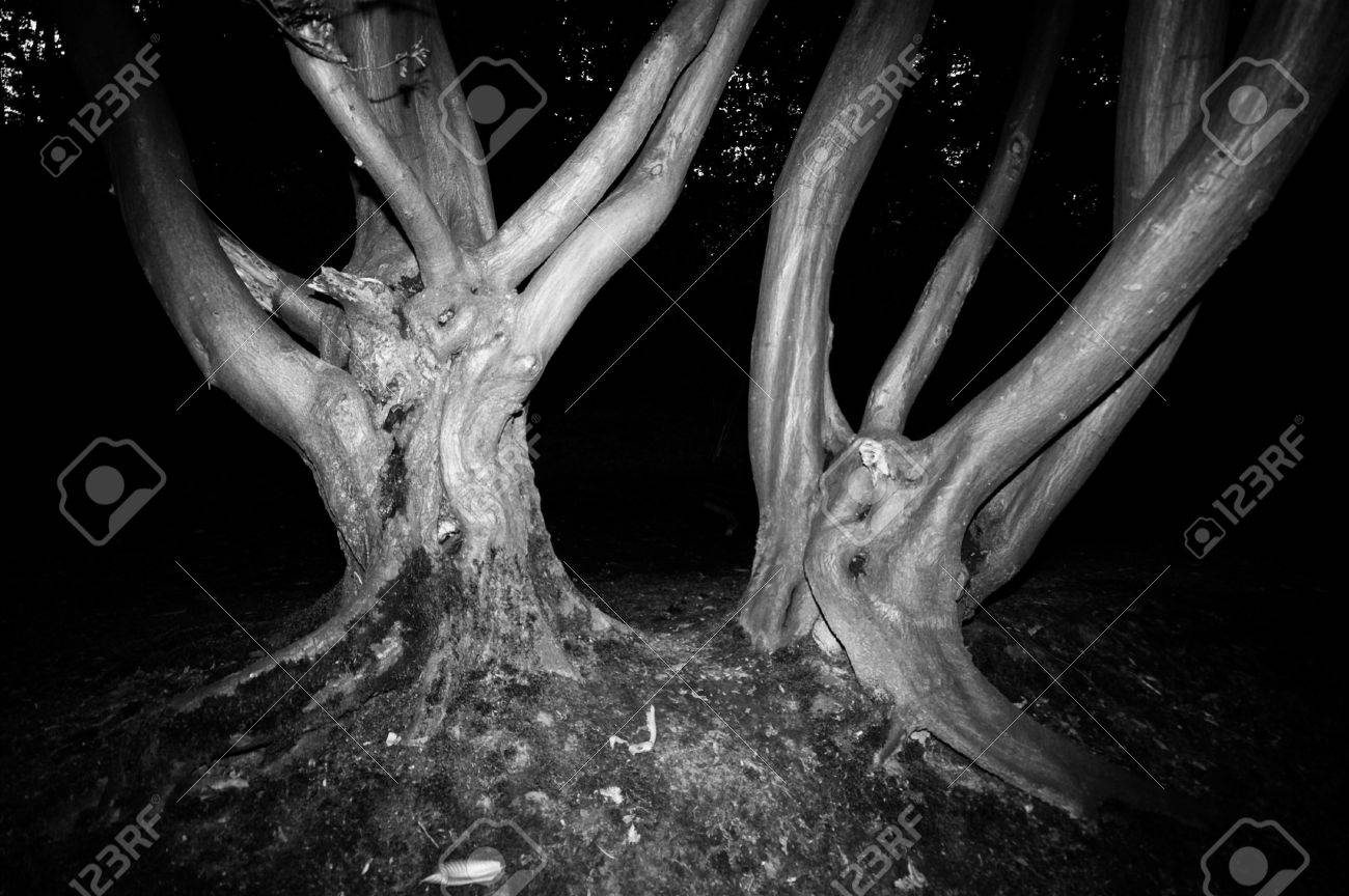 Spooky trees in a forest nice for halloween or scary events in black and white stock