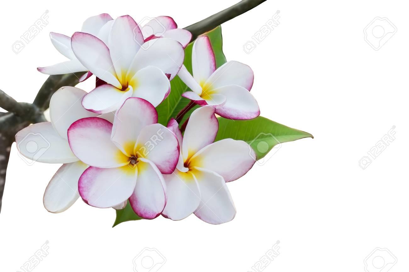 Bouquet De Couleur Reveur Doux Et Romantique Isole De Fleurs De