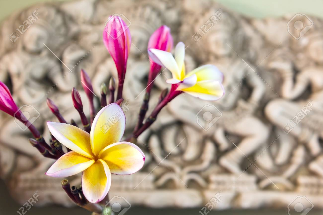 Beautiful white yellow and pink flower plumeria or frangipani beautiful white yellow and pink flower plumeria or frangipani bunch in asia boutique style background mightylinksfo