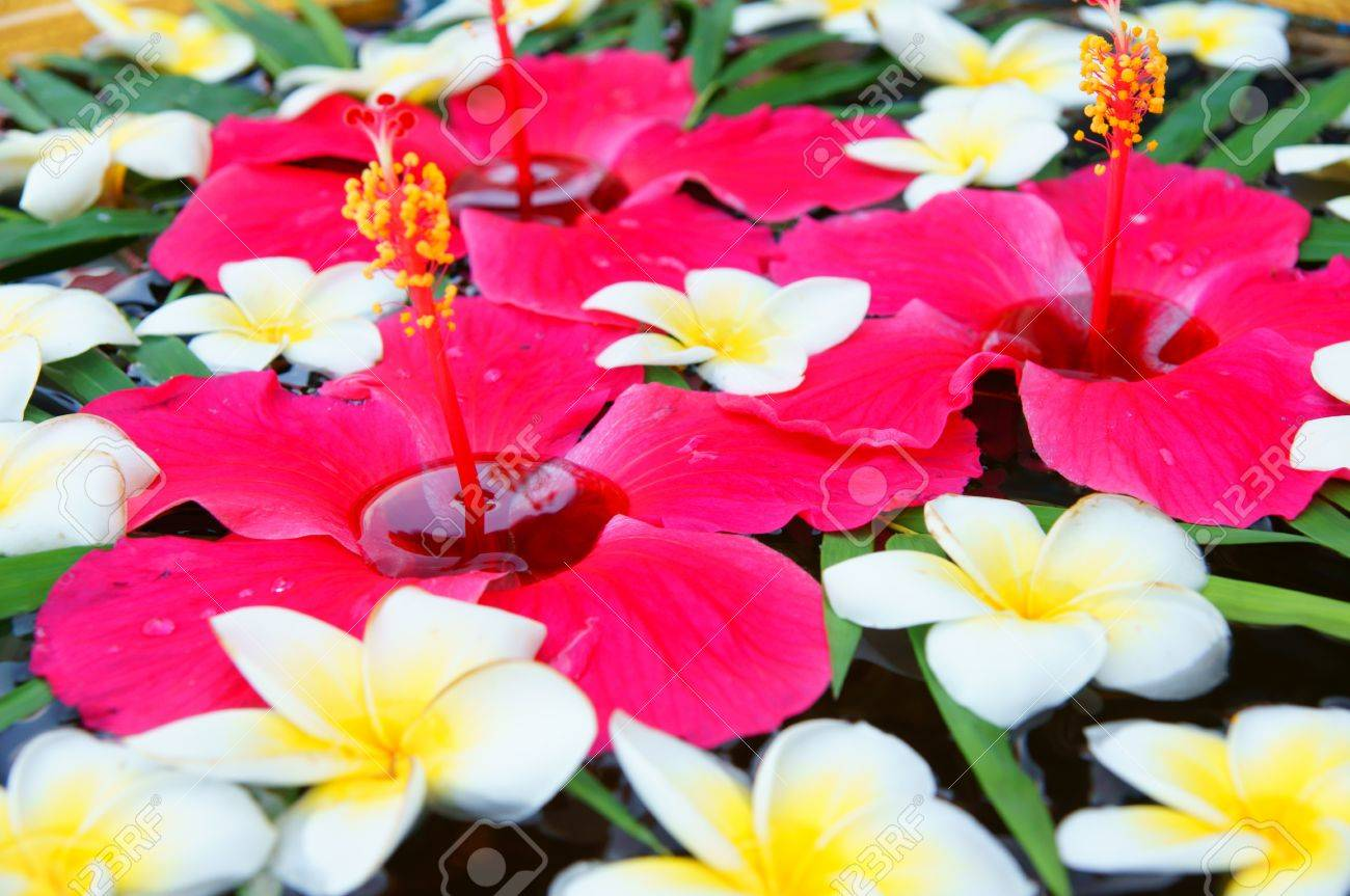 beautiful tropical flowers floating in water stock photo, picture, Natural flower