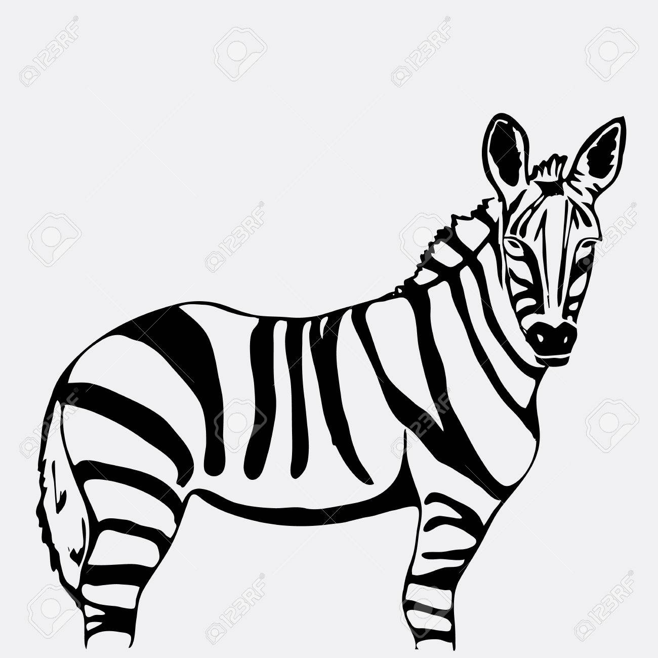 Hand drawn pencil graphics zebra engraving stencil style black and white