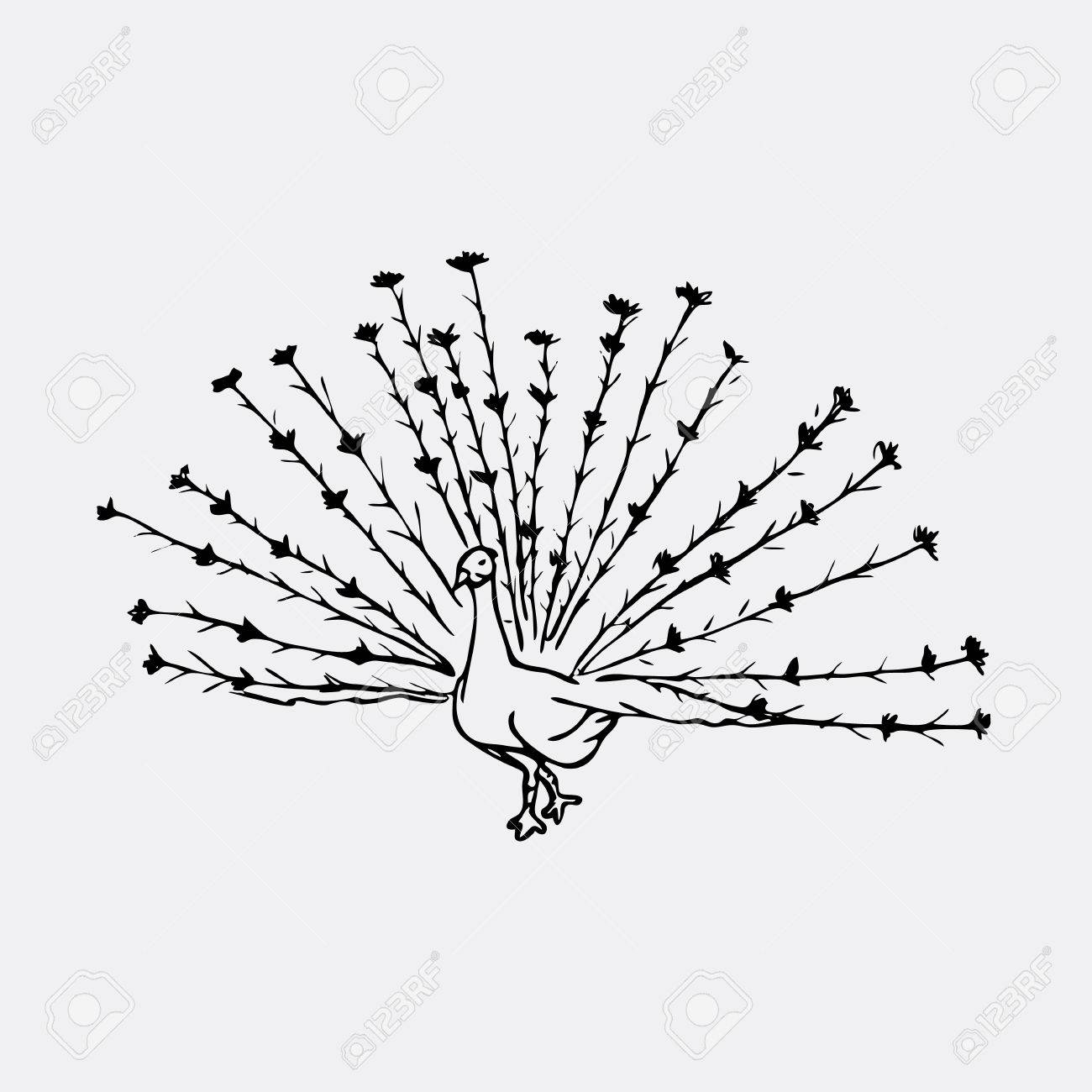 Hand Drawn Pencil Graphics Peacock Bird Engraving Stencil Royalty Free Cliparts Vectors And Stock Illustration Image 68319521