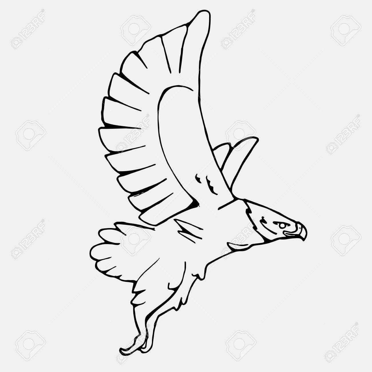 Hand-drawn Pencil Graphics, Vulture, Eagle, Osprey, Falcon, Hawk ...