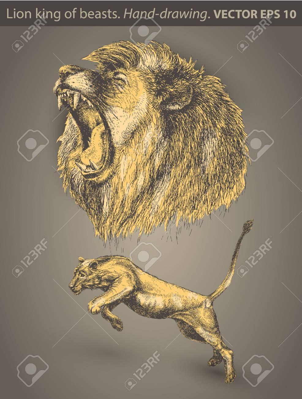 set Lion  animal, wild cat Stock Vector - 14201659