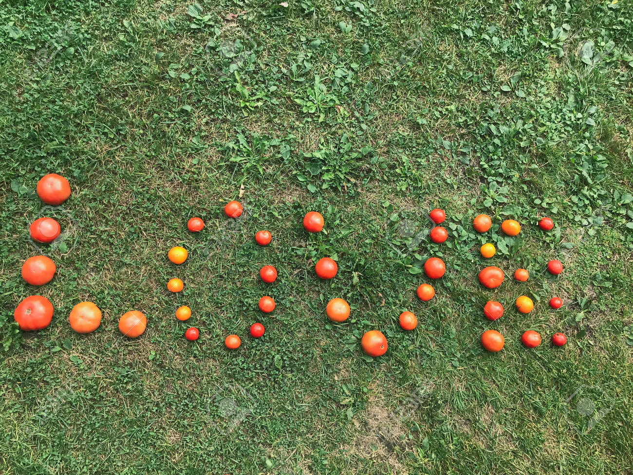 A word from a tomato, letters L, O, V, E. The word LOVE. Letters from red and yellow tomatoes on green grass. Healthy food, weight loss. Healthy habits, tomatoes for pasta and pizza. - 156096016