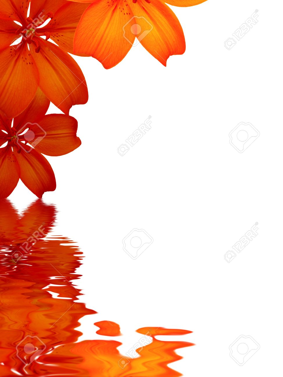 High Resolution Graphic Of Flowers Reflecting In Water On White ...