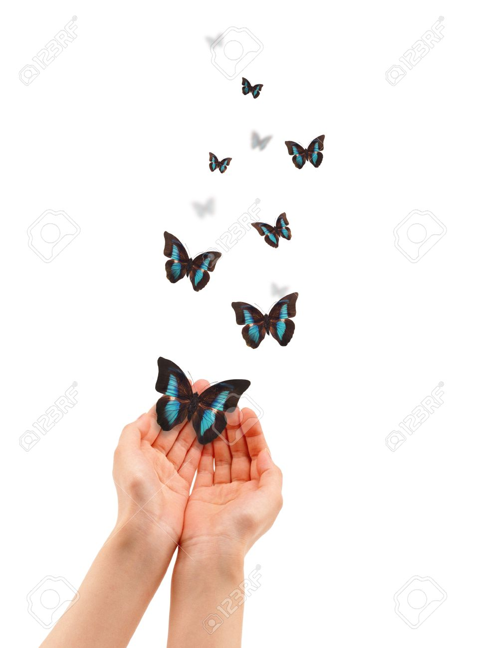 Hands holding a butterfly isolated on white background. Stock Photo - 11934652